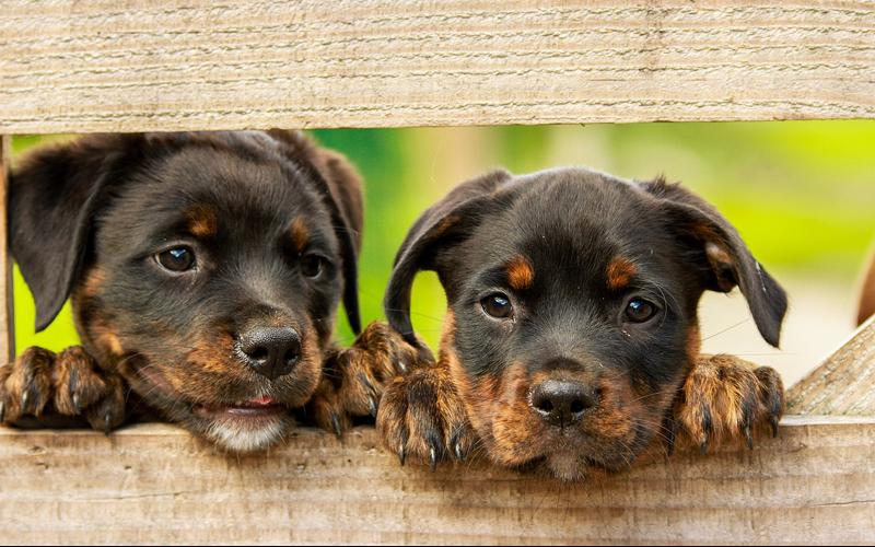 Das Veterinäramt der Stadt Wolfsburg verzeichnet leider einen erheblichen Anstieg des illegalen Hundehandels seit der Coronakrise.